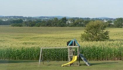 20090825-corn-field