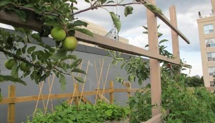 Greenest City - rooftop garden pic
